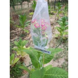 Sementes de Tabaco Balikesir (+500) nicotiana tabacum