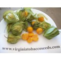 Physalis peruviana 200 seeds