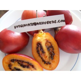 Tomate de Arbol Tamarillo (Solanum betaceum) Semillas