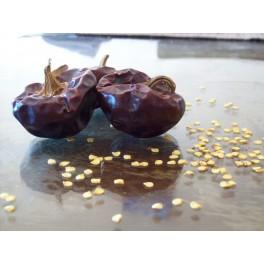 Ñora pimiento dulce 40 semillas capsicum annuum