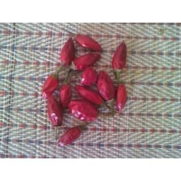 Pimienta picona (mojo picon) 40 semillas capsicum anuumm