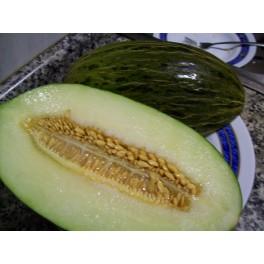 Santa Claus melon Piel de sapo seeds - Cucumis melo