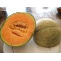 cantaloupe meloen zaden - Cucumis melo