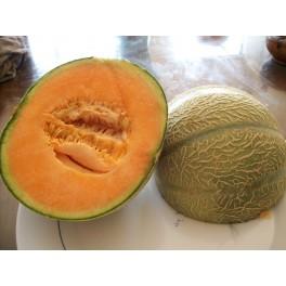 cantaloupe melon  seeds - Cucumis melo