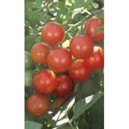 sementes de tomate CHERRY - Solanum lycopersicum
