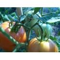 3 cantos sementes de tomate  - Solanum lycopersicum