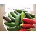 Jalapeño semințe - Capsicum annuum